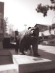 artsy bear_edited-1